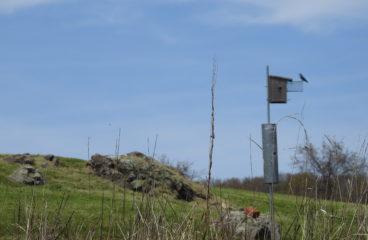 Monitoring: Eastern Bluebird And Purple Martin Next Success